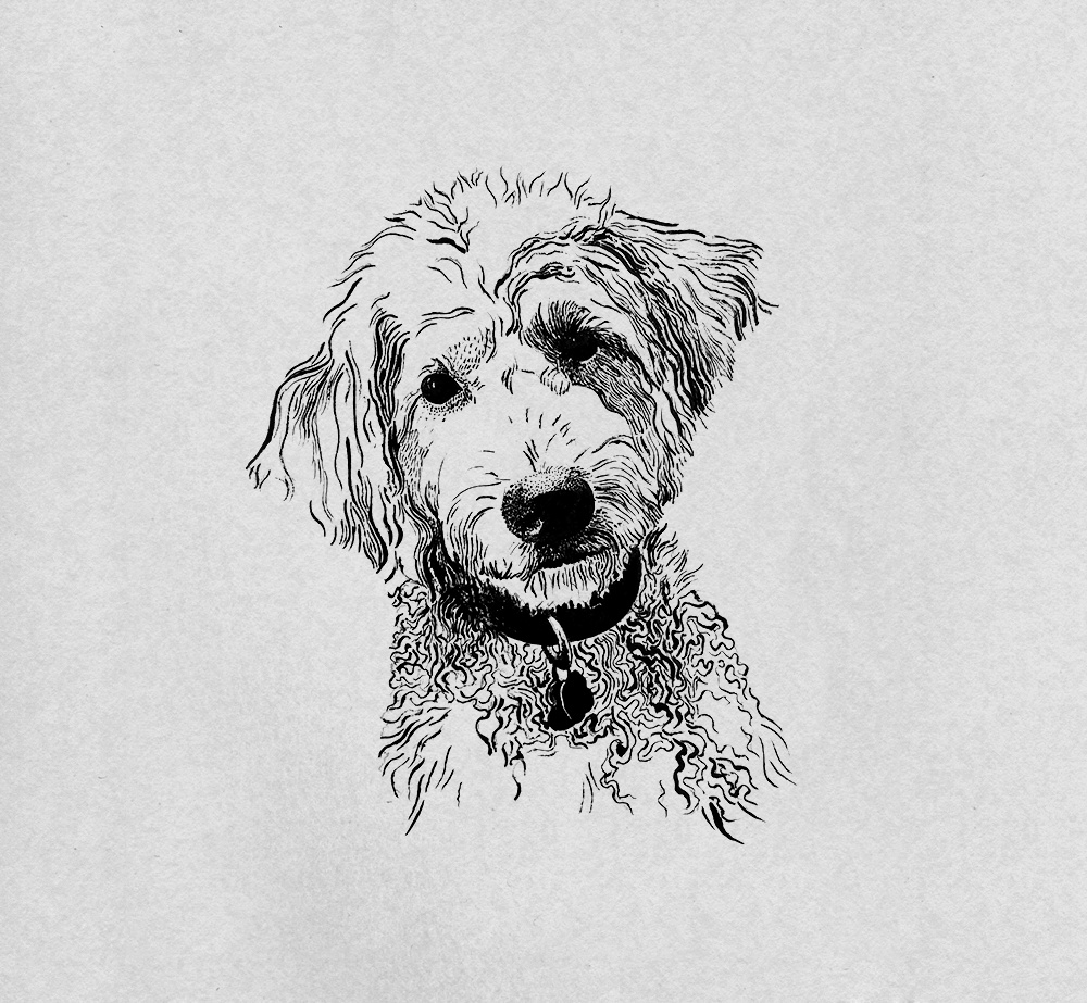 golden-doodle-dog-illustration.png