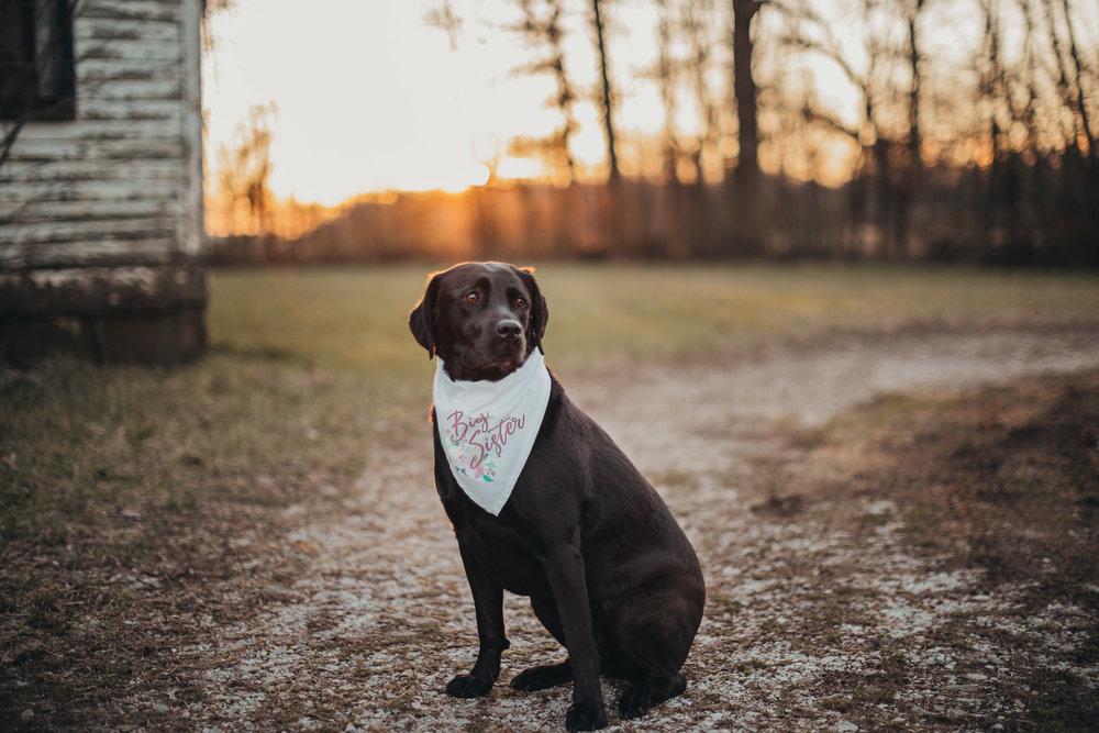 Dog Wearing Bandanna