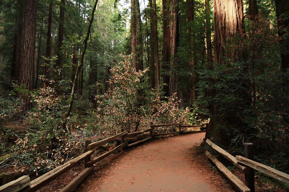 pathway pt.1