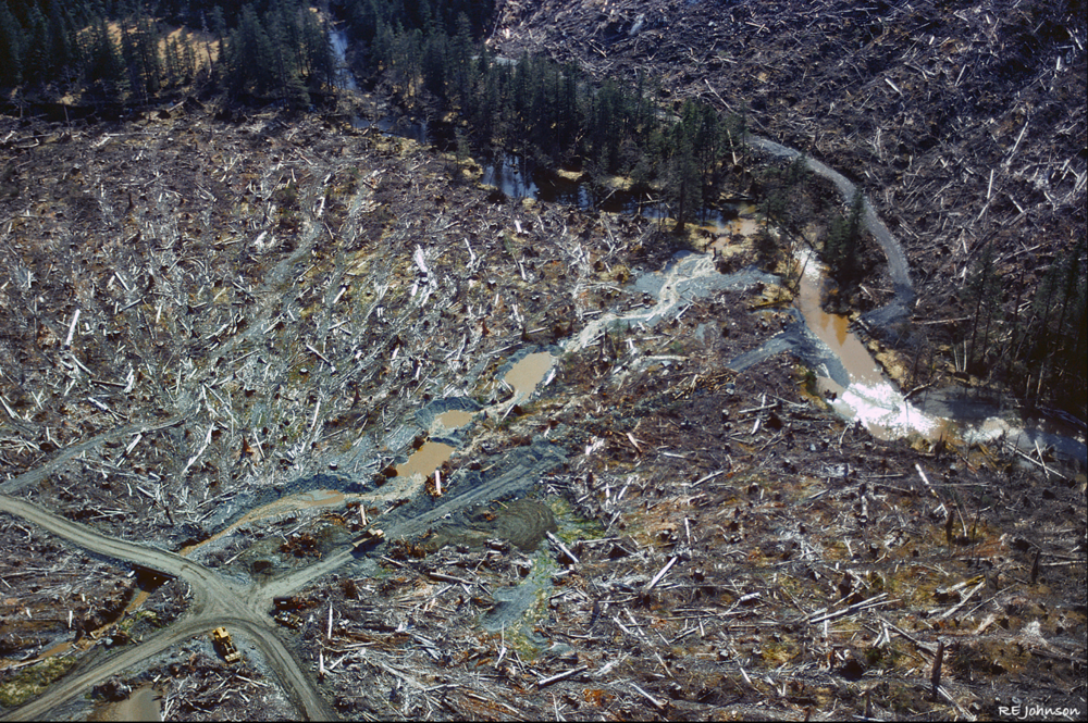 A 1970s era clearcut on Baranof Island near Sitka. Today, clearcutting on the Tongass is still legal, but loggers must not clearcut within a 200-foot buffer zone next to a stream, a rule conservationists say is often violated. Photo by Robert Johnson.