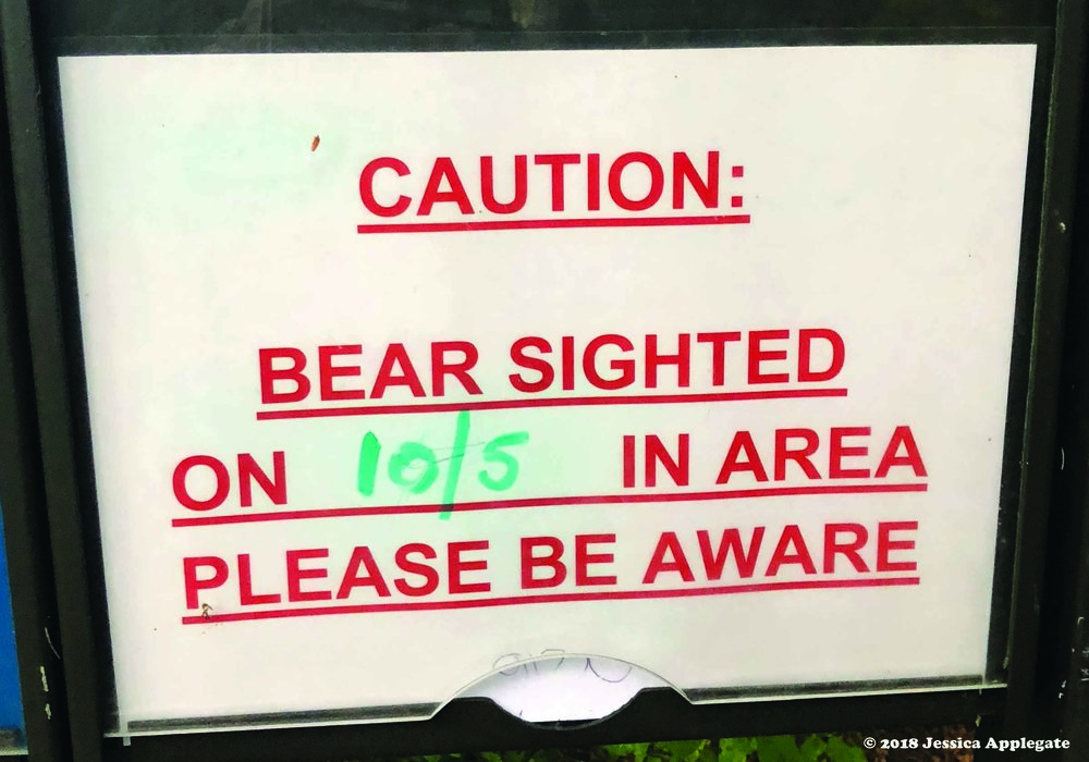 A recent bear sighting near Sitka.