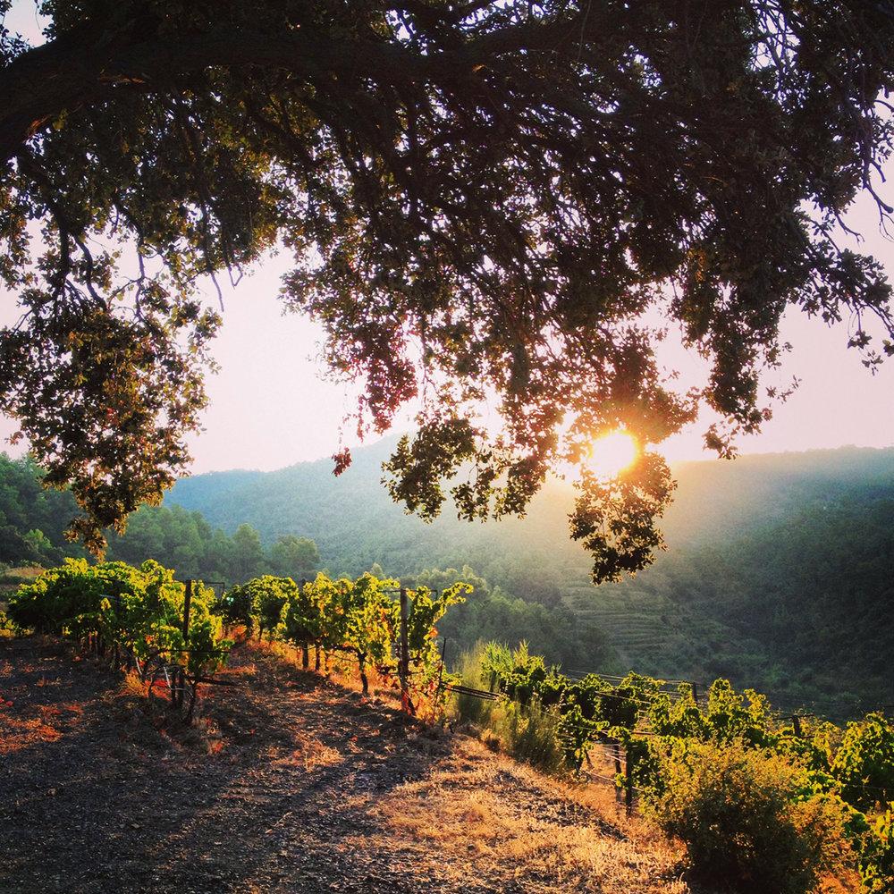 In Bru vineyard.jpg