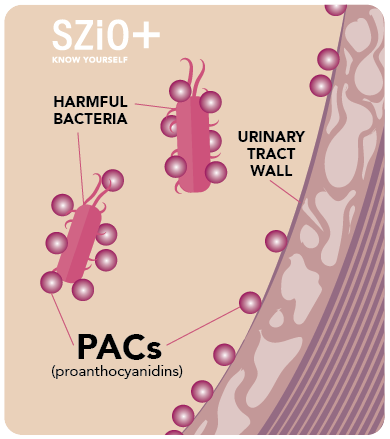 PACs-01.png