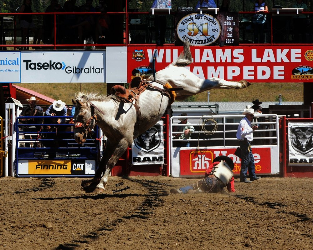 Stampede rodeo tickets -
