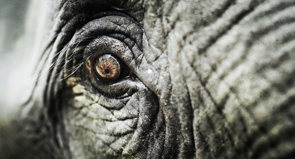 Elephant Eyeball.jpeg