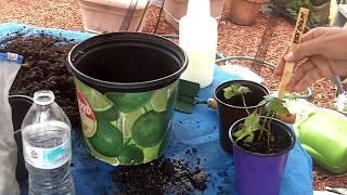 anita gardening.jpg