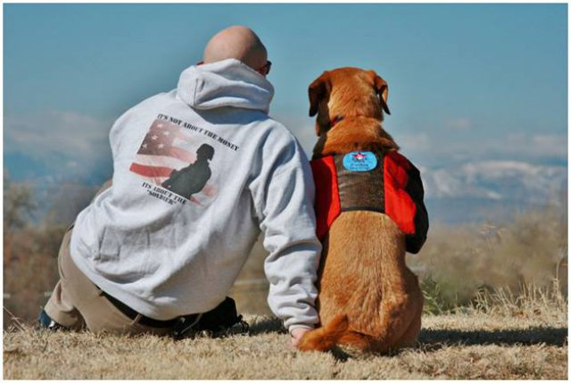 freedom service dogs: a new leash on life