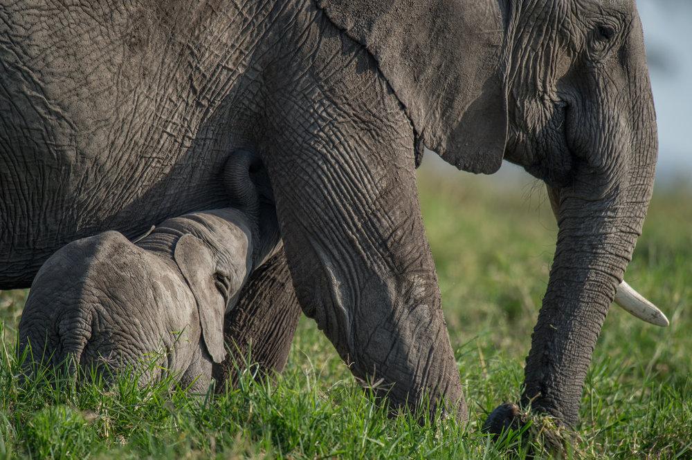 reteti elephant sanctuary