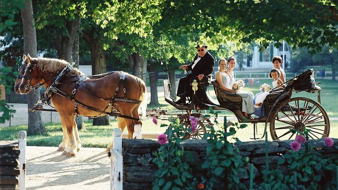 horse-wedding.jpg.694x390_default.jpg