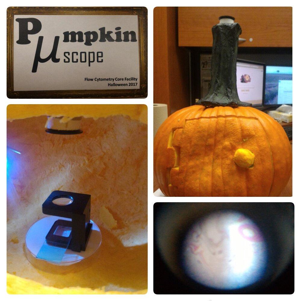 PumpkinMicroscope.jpg