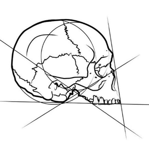 logo skull illustration