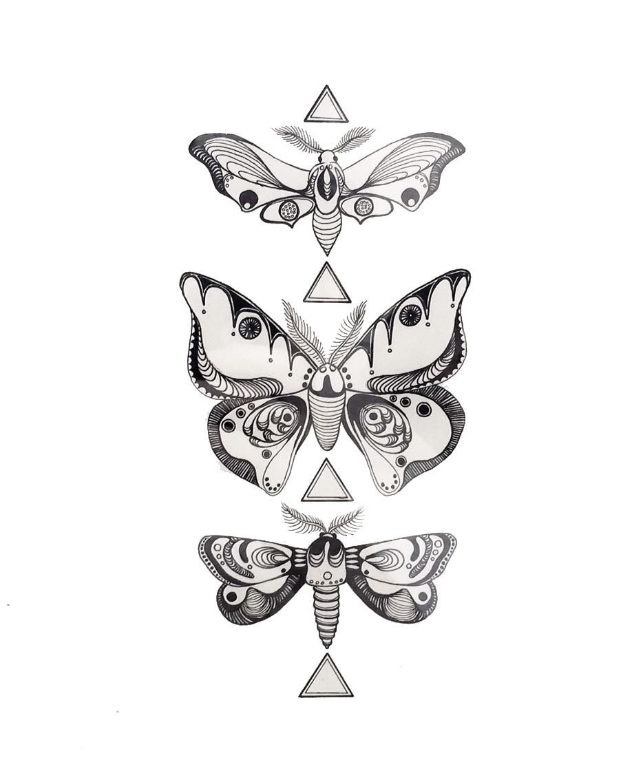 Moth Study