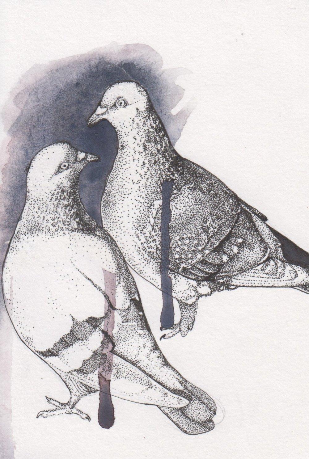 Pigeon 3.jpg