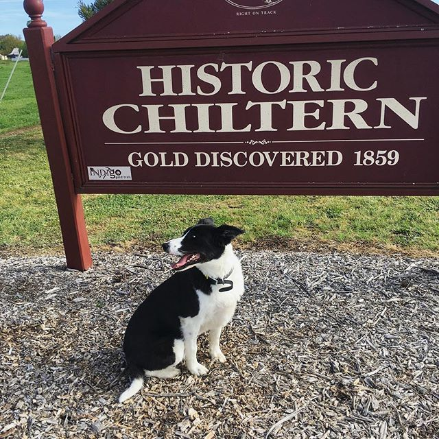Today we're at the historic town of Chiltern in Victoria, soaking up the nostalgia of this quaint mining town. Beautiful heritage architecture, flourishing birds and wildlife and endless visitors activities, Chiltern is one to add to your list ! ⠀ ⠀ @australianroadjourneys #australia #travelaustralia #tourism #outbacktours #travel #maggiemondays #dogsofinstagram #travelwithdogs #dogs #bordercollie