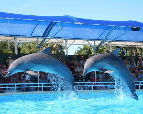 Dolphin Marine Magic, Coffs Harbour, New South Wales
