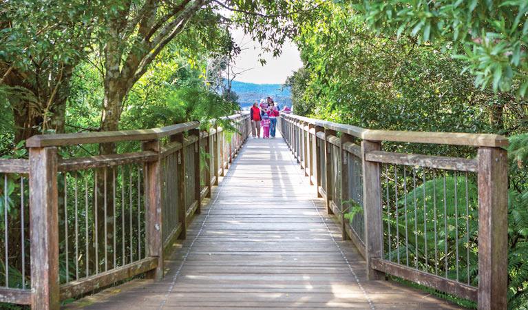 Dorrigo National Park, New South Wales