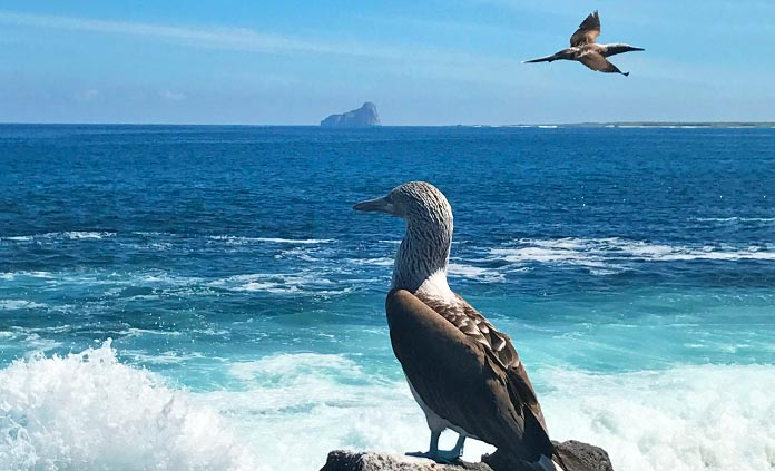 Galapagos Ocean Cruise Multi-Adventure Tour - Ecuador's Galapagos Islands are a natural selection for epic animal encounters. Cruise, bike, hike, kayak and be awestruck with Backroads.