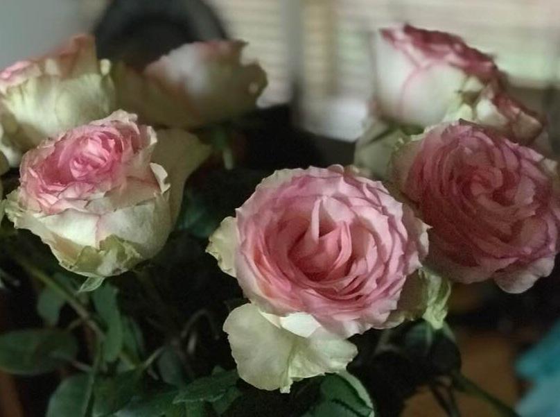 pamela+old+roses.jpg