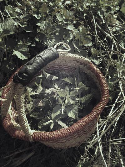basket of nettles.jpg