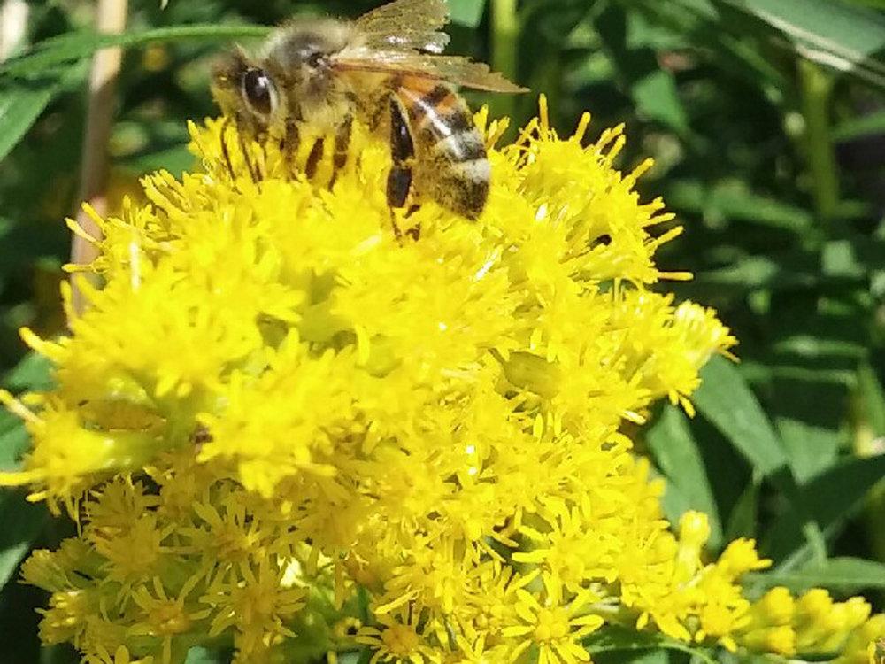 bee(1).jpg