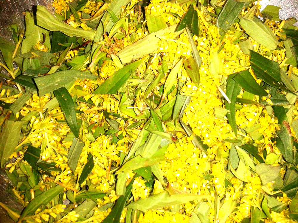 bright goldenrod.jpg