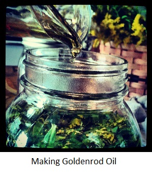 goldenrod oil.jpg