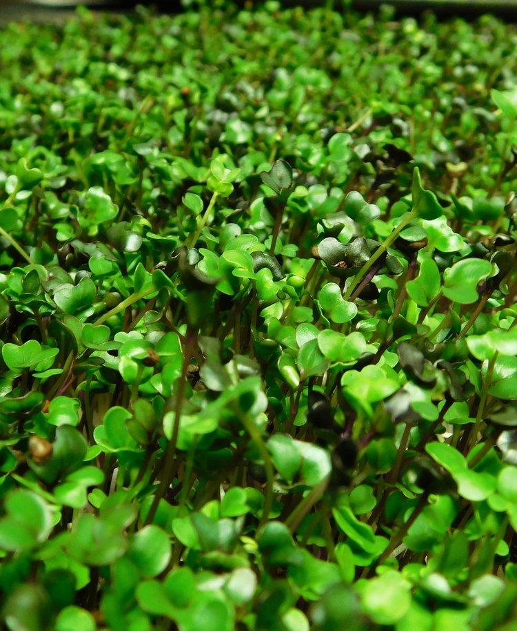 Broccoli+View.jpeg