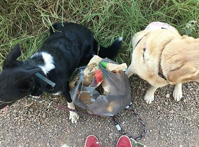 Two plastic bags worth of rubbish this afternoon.⠀ We are the future!⠀ Bring a bag when you go on a walk!⠀ #missionlitterpickup⠀ Reposted from @wizardfeet