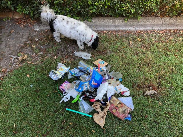 I know you must be fed up of seeing these litter pix!!! Guess what??? I ain't stopping! Simply coz there is so much to pick up.  This was yesterday's collection. Honestly didn't think I picked up much till I actually tipped it out.  I really admire Bec Baker  who goes out diligently twice a day when walking her dog and picks up litter. 👍🏽🙏🏽💗