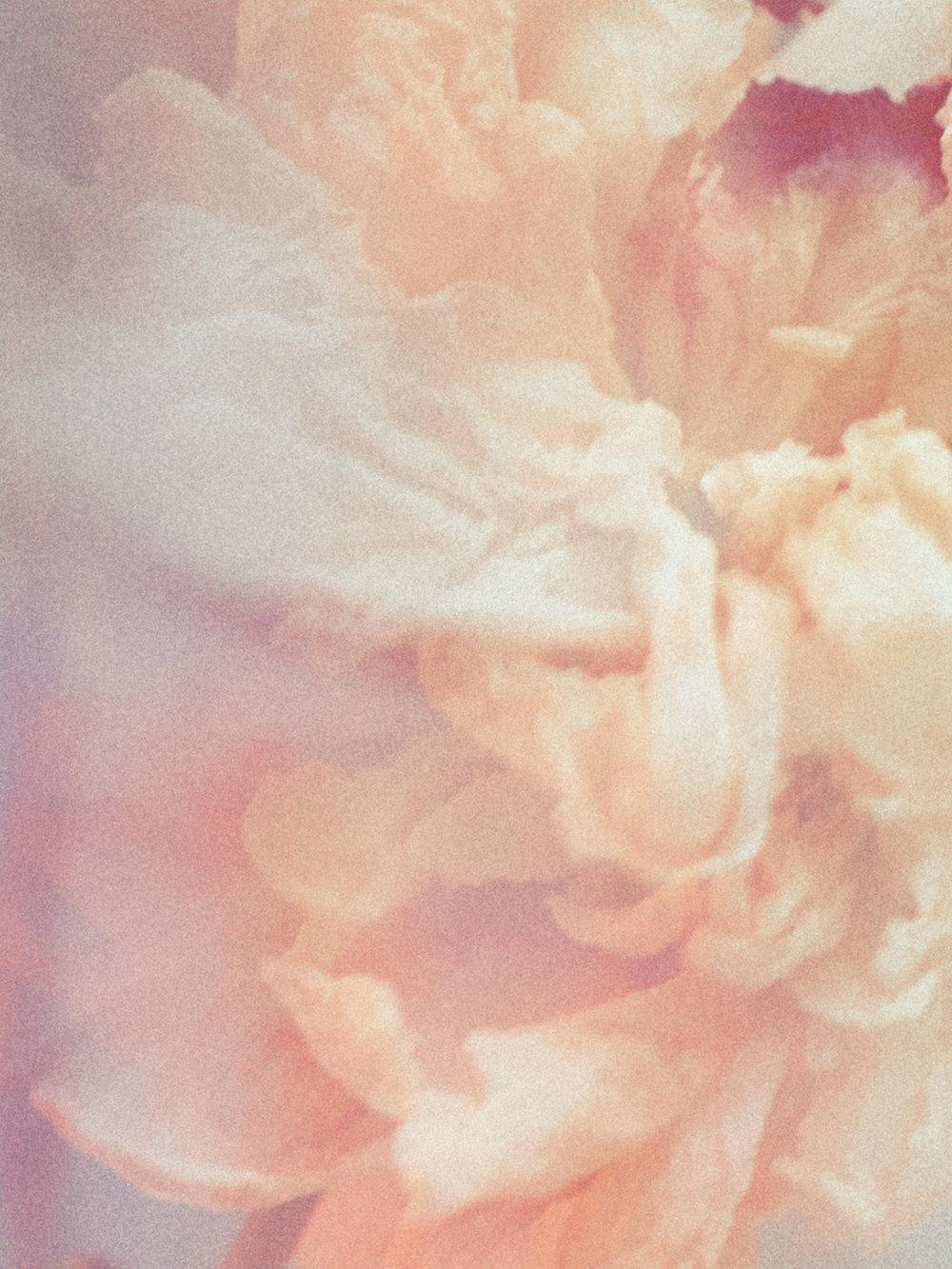 012-icon-artist-management-Kristin-Vicari-Girls and Flowers-12.jpg