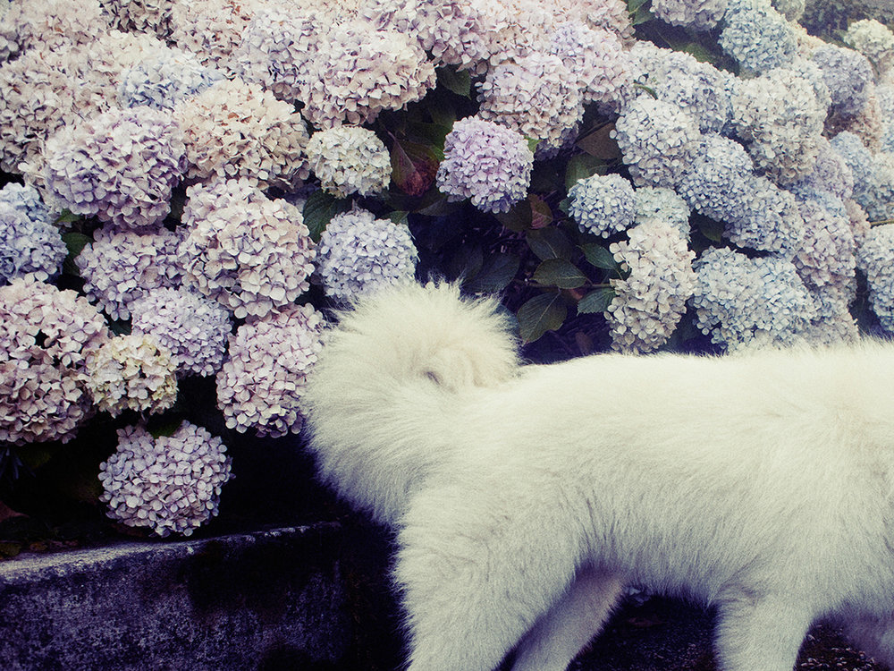 035-icon-artist-management-Kristin-Vicari-Girls and Flowers-35.jpg