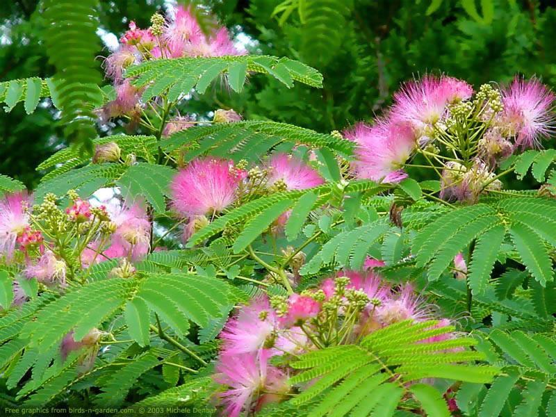 grace mimosa.jpg