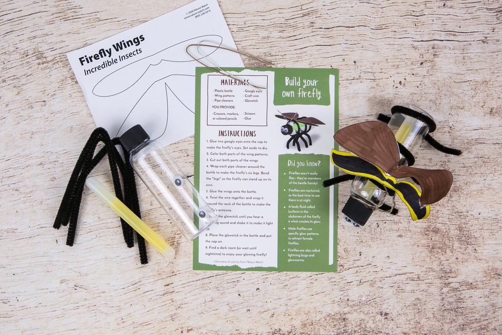 Build Your Own Firefly Kit from the Wonderkin INSECT Box