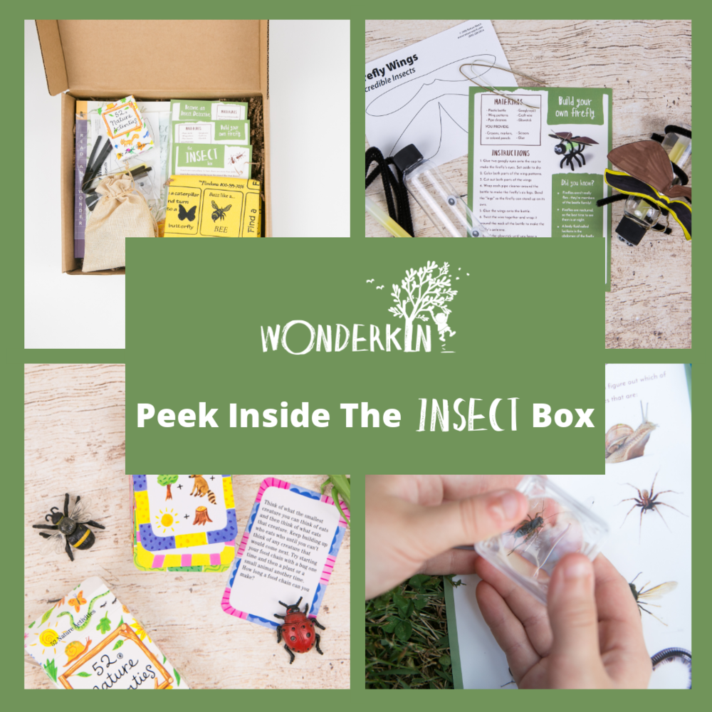 Peek Inside the Wonderkin Insect Box -- Our educational subscription boxes are designed to support early childhood development by getting kids outdoors and connected to nature.