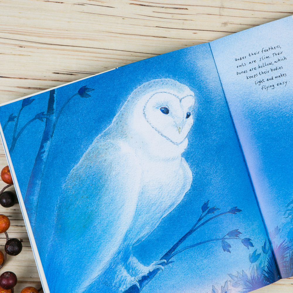 White Owl, Barn Owl by Nicola Davies - featured in the Wonderkin Owl Box