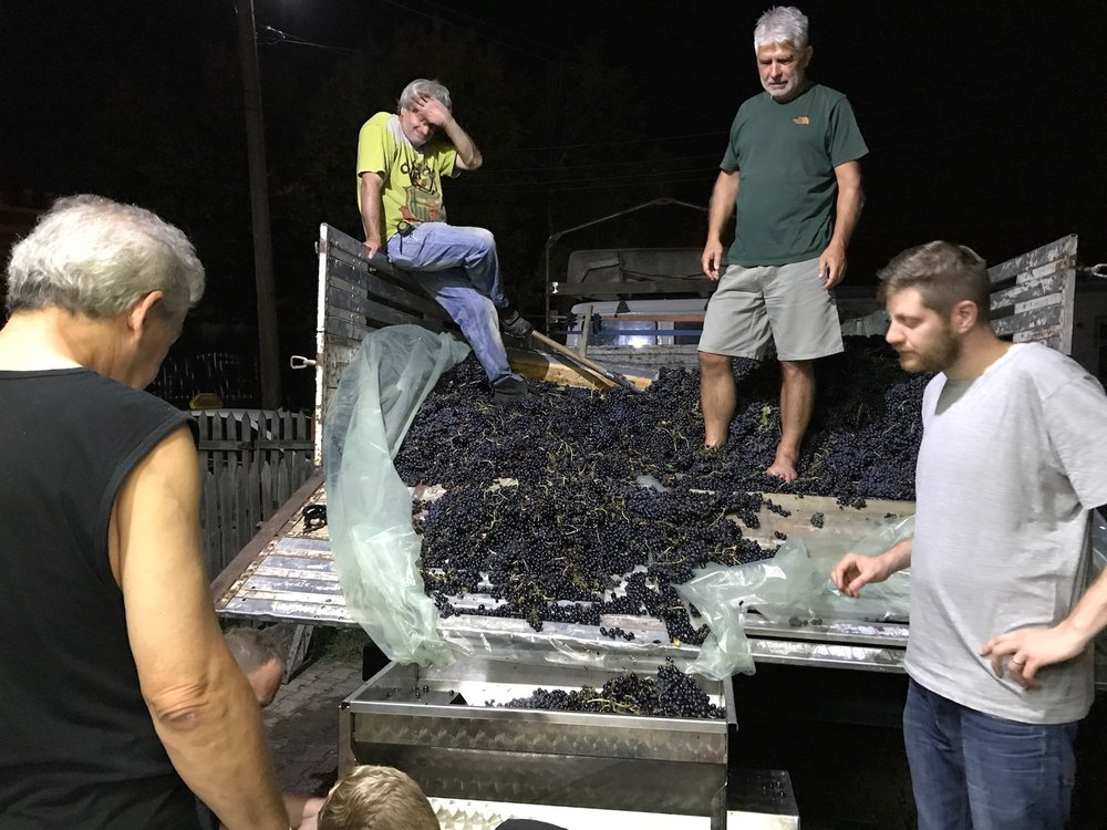 Paul Caputo with Macedonian grape pickers and advisors.