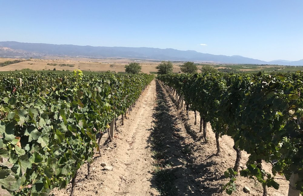 The sun scorched vineyards of Tikves
