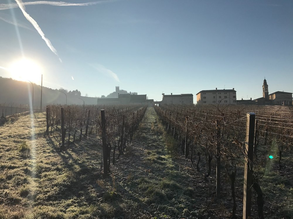 Icy vineyards on the edge of Soave