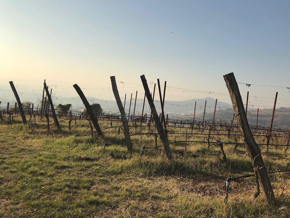 More vineyards at La Biancara