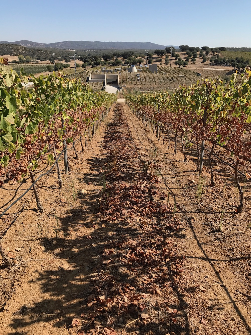 vineyard-herdade-freixo.jpg