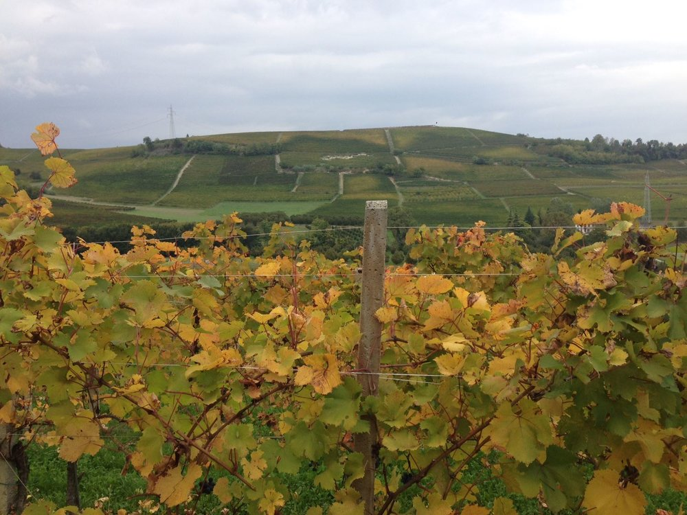 Massucco-Vineyards.jpg