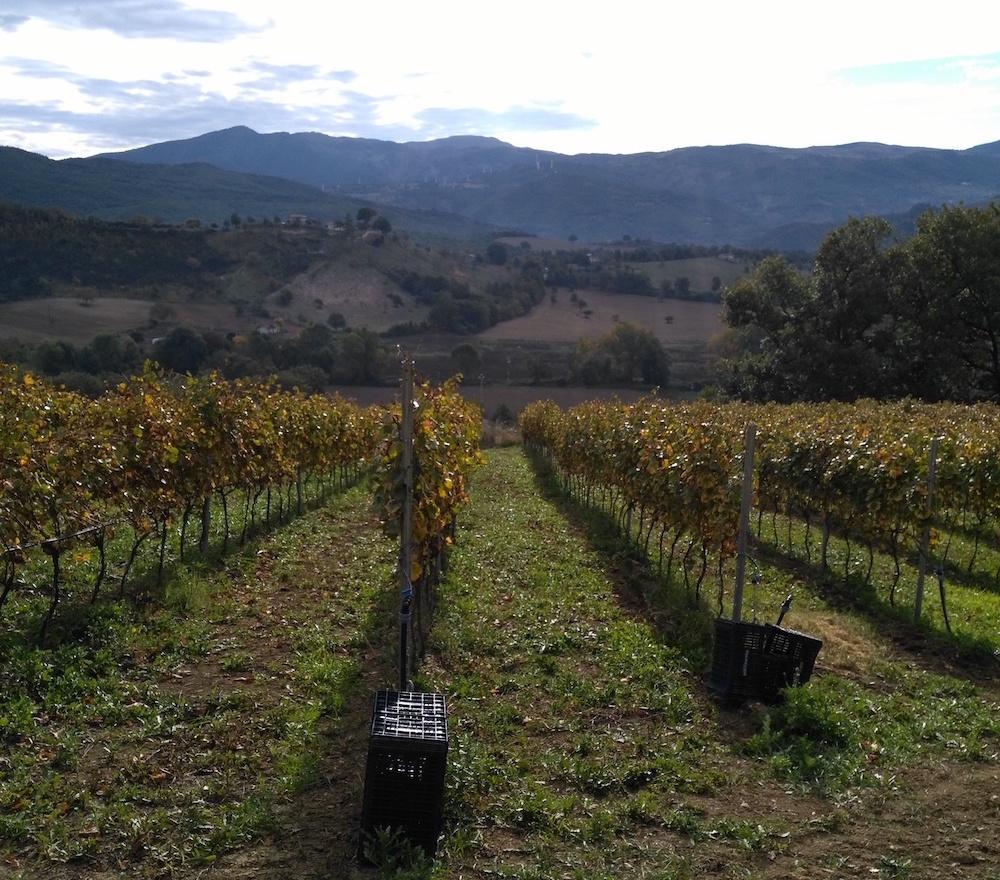 Alte-Vigne-della-Val-Camastra-Basilicata.jpg