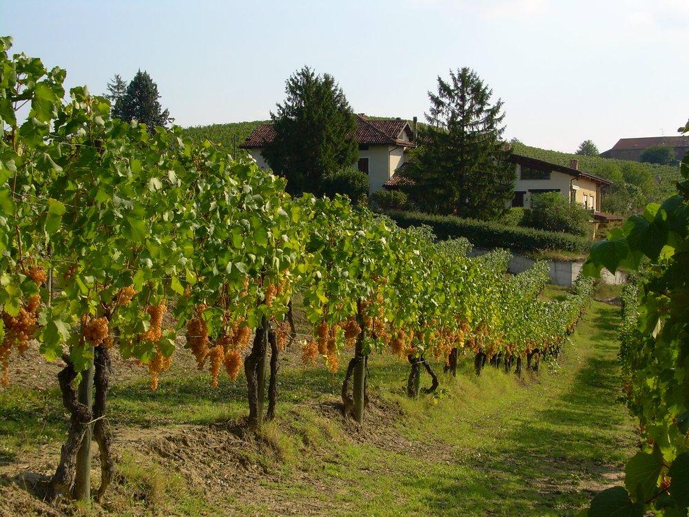 Nizza-Monferrato-Paul-Caputo-1.jpg