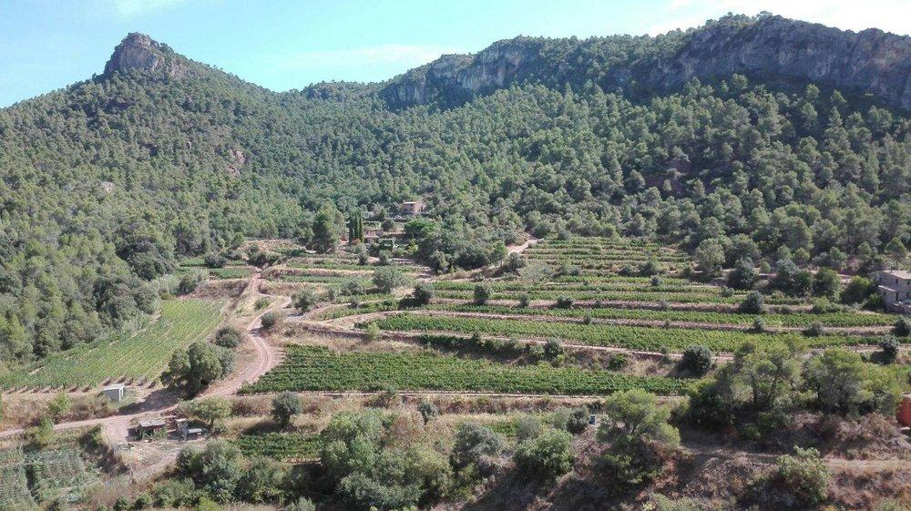 Cellers-Baronia-del-Montsant.jpg