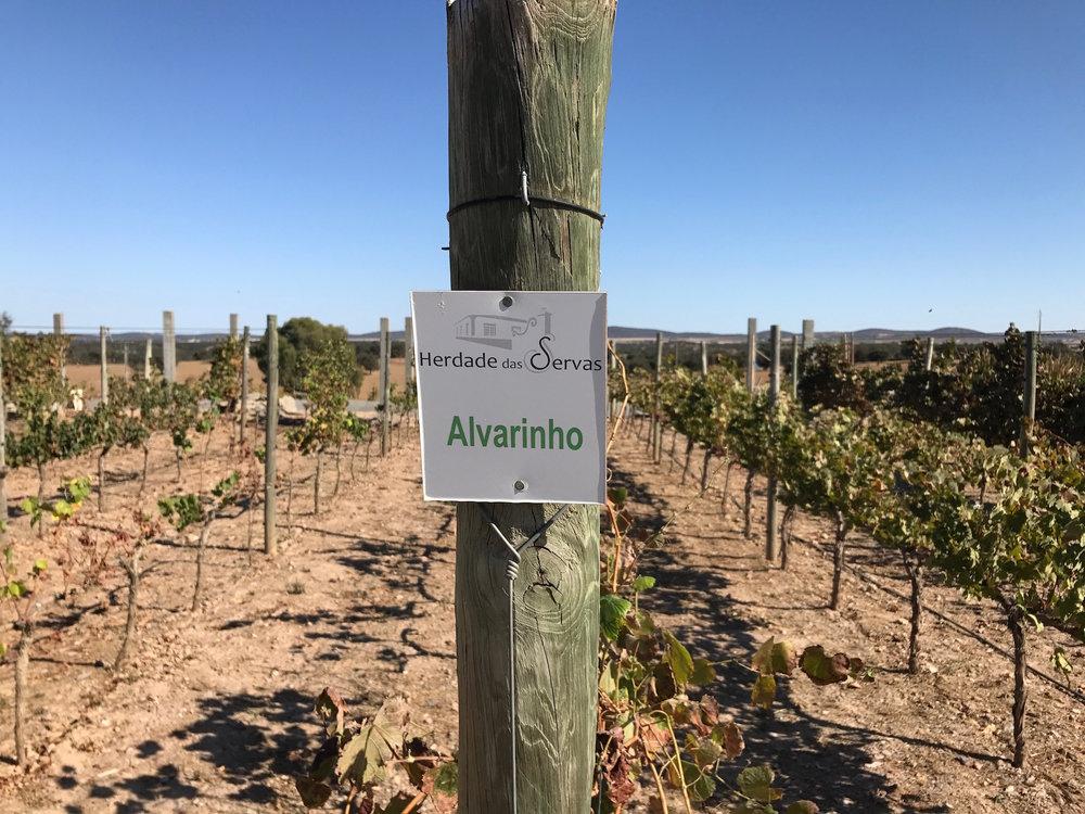 vineyards alvarinho servas.jpg