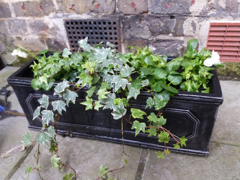 Planting up winter window boxes, December 2017