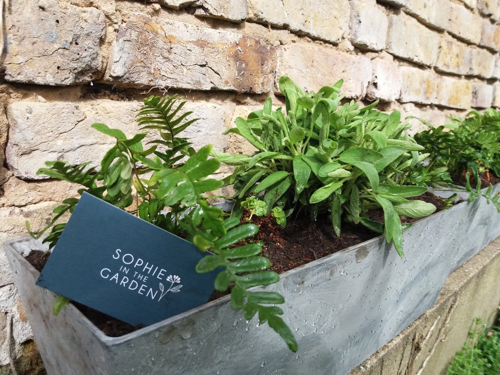 Spring 2018, planting up more Window boxes with Ferns, Sage and Geraniums