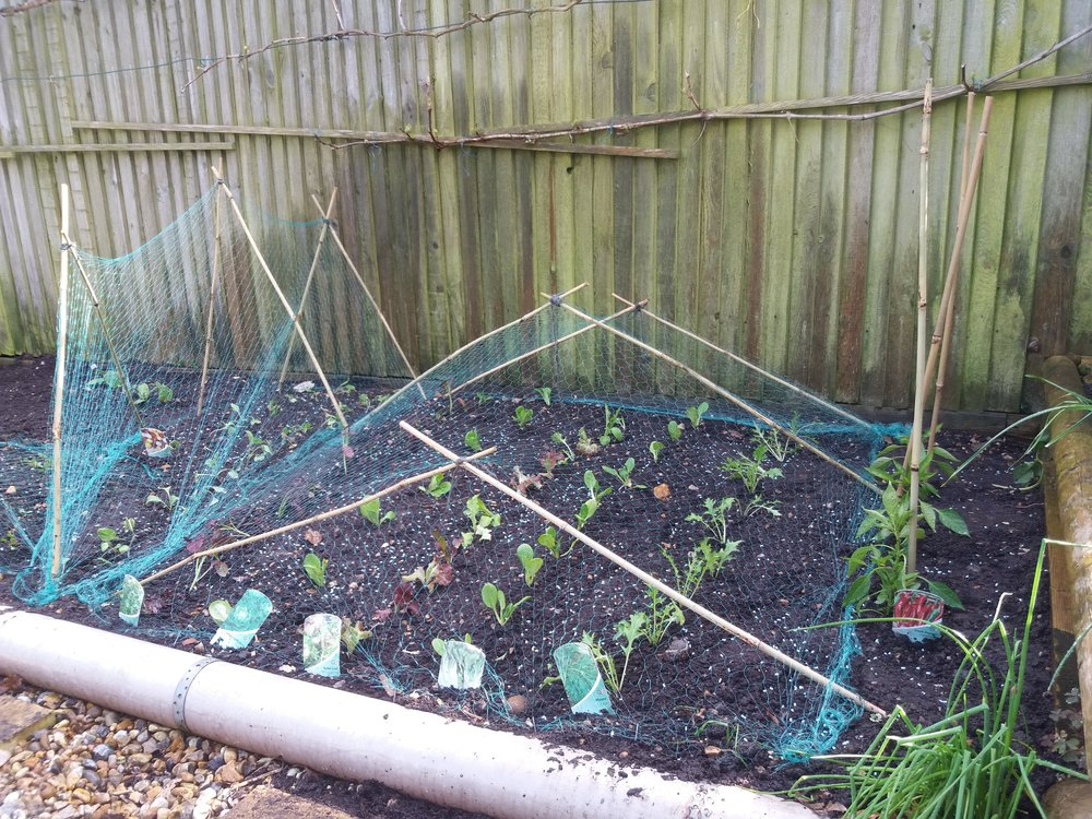 Vegetable planting, May 2018