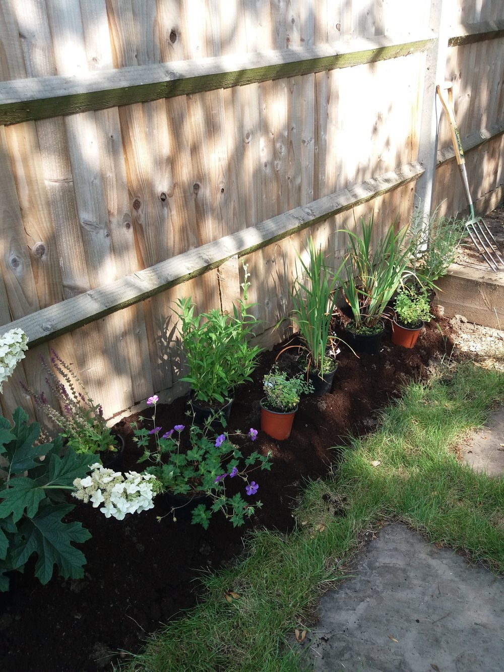 Planting up a garden for more summer colour, June 2018