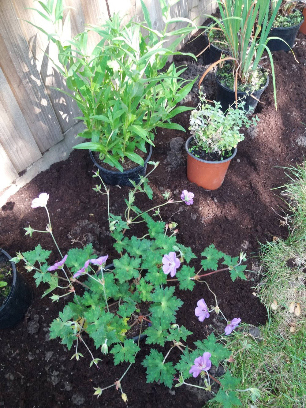 Planting up a garden for more summer colour